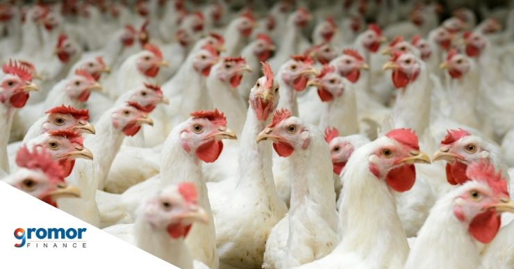 How To Get A Business Loan For Your Poultry Farm