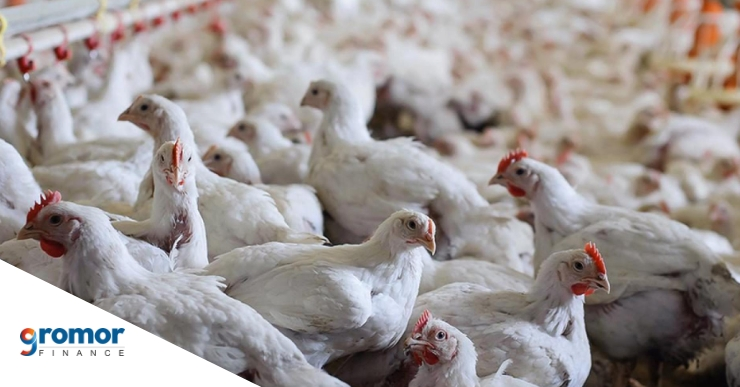 Steps To Start Poultry Farming Business